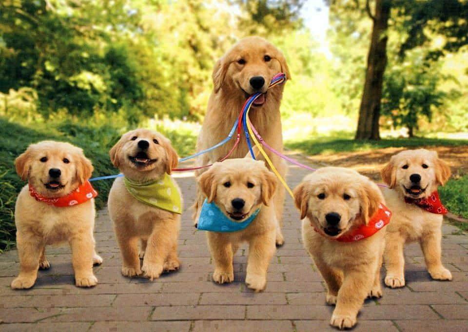 Adopteren van een hond of pup